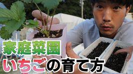 上平敦之さんが投稿したイチゴの栽培方法を解説した動画(本人提供)