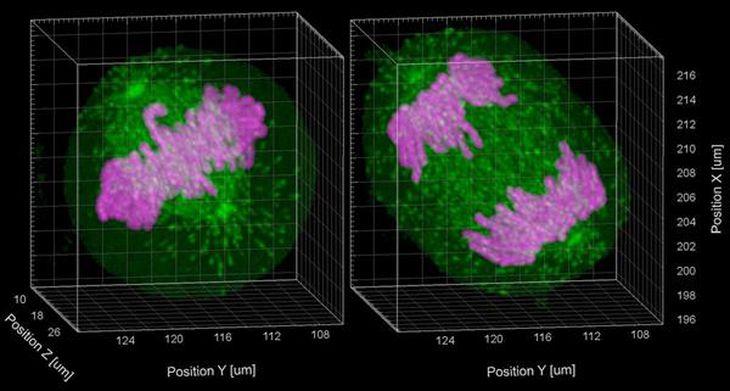 【理研が語る】細胞の秘密を探す旅…理研ライフサイエンス基盤技術研究センター・清末優子
