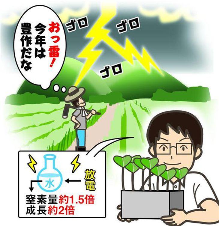 「雷の多い年は豊作」伝承は本当だった! 島根の高校生が実験で突き止める