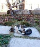 県庁内の庭園で寝転ぶ野良猫=16日(外崎晃彦撮影)