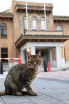 県庁敷地内の議会前でくつろぐ猫たち。車も通る場所だが…=10月10日